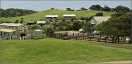 Ace Hi Riding Ranch - Lismore Accommodation