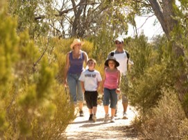 Long Island Caravan Park Cabins - Lismore Accommodation