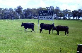 Cluan Homestead - The Managers Residence - Lismore Accommodation