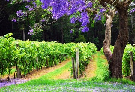 Bago Vineyards - Lismore Accommodation