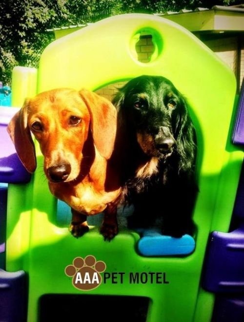 AAA Pet Motel - Lismore Accommodation