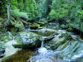 Tarkine Wilderness Experience At Corinna - Lismore Accommodation