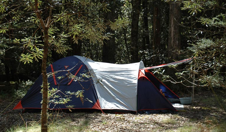 Thungutti campground - Lismore Accommodation