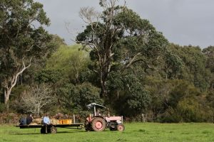 Boronia Farm - Lismore Accommodation