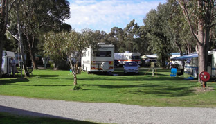 Pinjarra Caravan Park - Lismore Accommodation