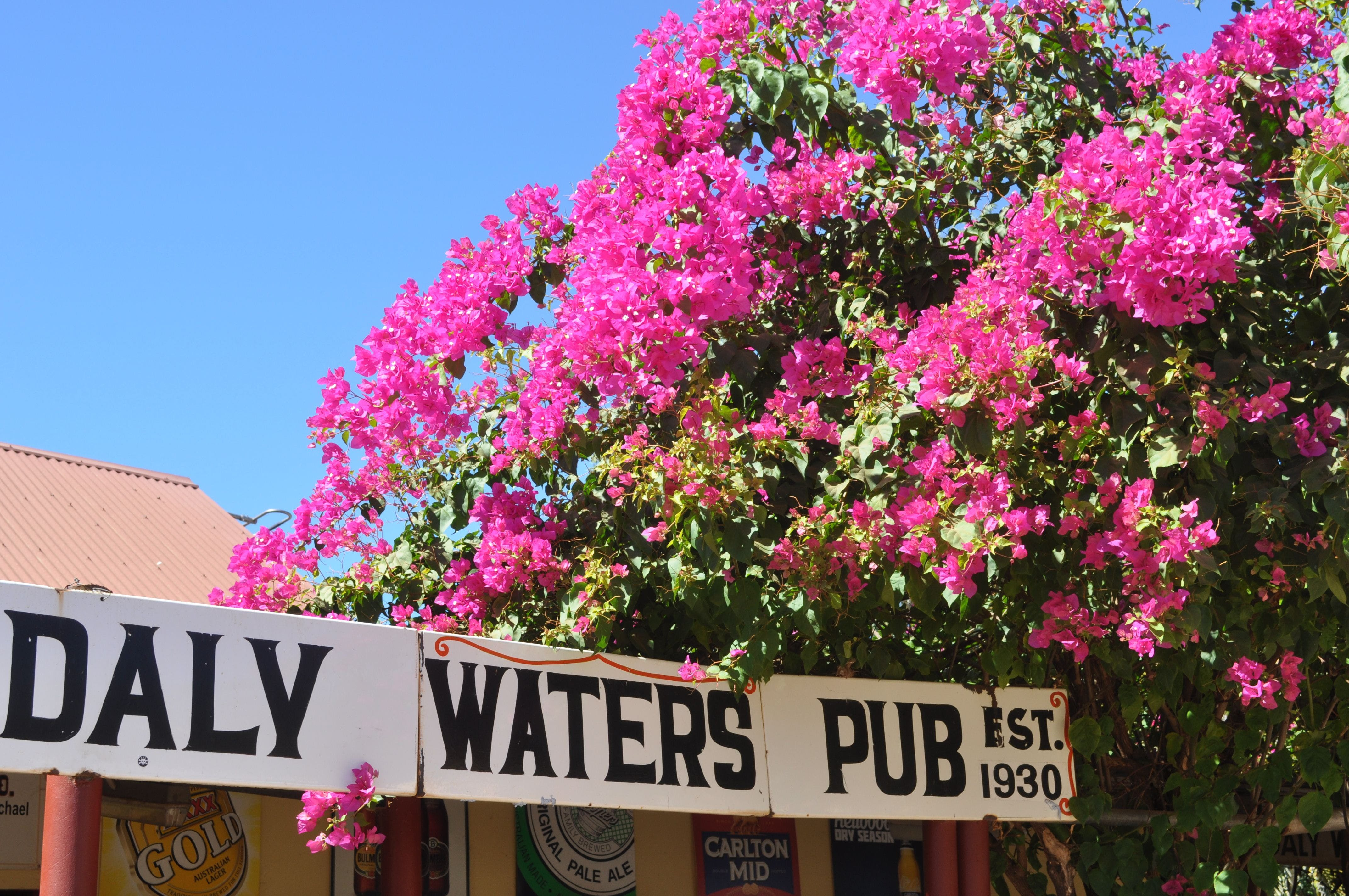 Daly Waters Historic Pub - Lismore Accommodation