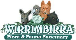 Wirrimbirra Sanctuary - Lismore Accommodation