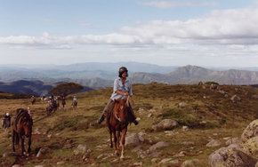 High Country Horses - Lismore Accommodation