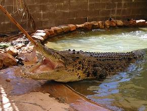 Wyndham Zoological Gardens and Crocodile Park - Lismore Accommodation