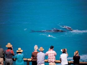 Whale Watching At Head Of Bight - Lismore Accommodation