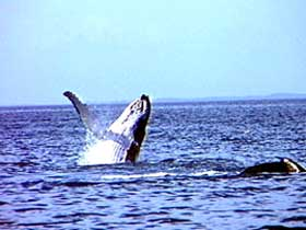 Whale Watching - Lismore Accommodation