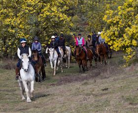 Burnelee Excursions on Horseback - Lismore Accommodation