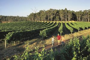 Margaret River Caves Wine and Cape Leeuwin Lighthouse Tour from Perth - Lismore Accommodation