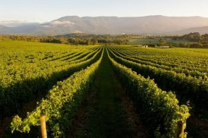 Half-Day Swan Valley Walk  Fruit Orchard - Lismore Accommodation