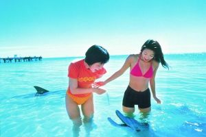 Monkey Mia Dolphins  Shark Bay Air Tour From Perth - Lismore Accommodation