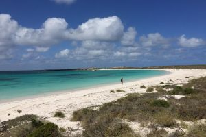Abrolhos Island Half Day Fly and Flipper - Lismore Accommodation
