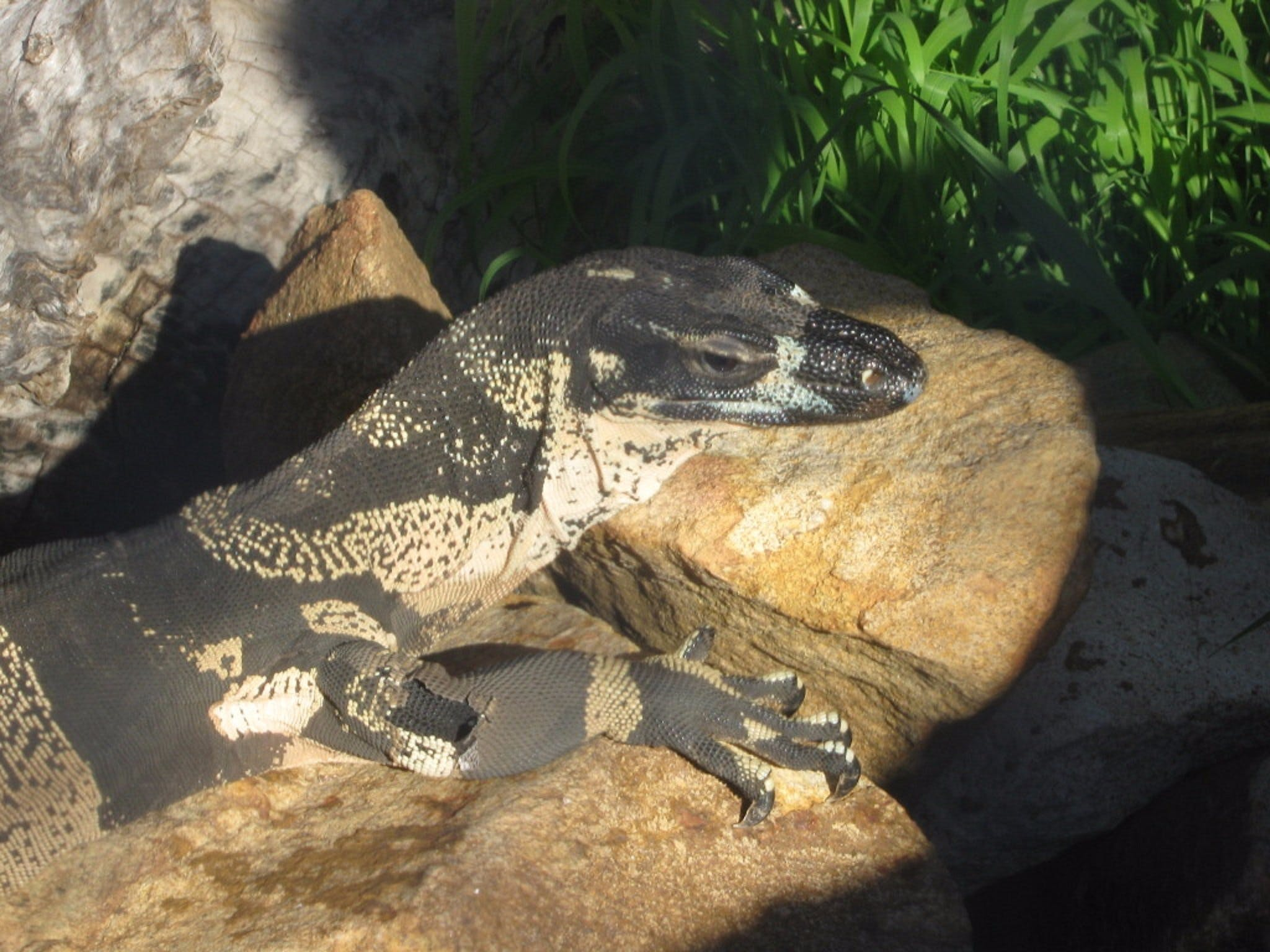 Armadale Reptile Centre - Lismore Accommodation