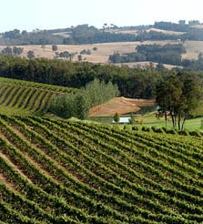 Brookhampton Estate Vineyard