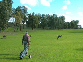 Coffin Bay Golf Club - Lismore Accommodation