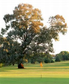Cowra Golf Club - Lismore Accommodation