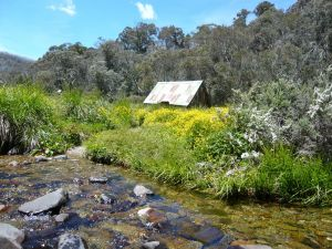 Hedonistic Hiking's Falls Creek to Hotham - Lismore Accommodation