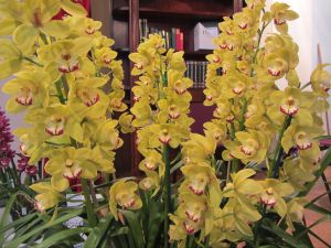 Sapphire Coast Orchid Club Winter Orchid Show - Lismore Accommodation