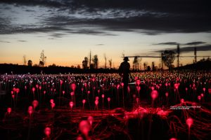 Field of Light Uluru - Lismore Accommodation