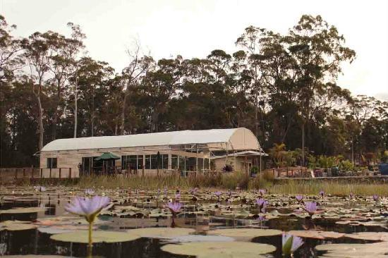 Abundance Cafe and Garden Centre - Lismore Accommodation