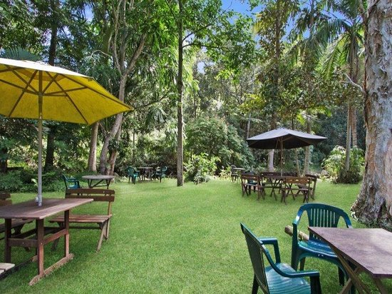 Rainforest - Lismore Accommodation